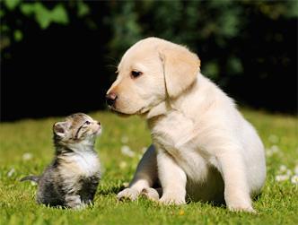 ペット・動物関連